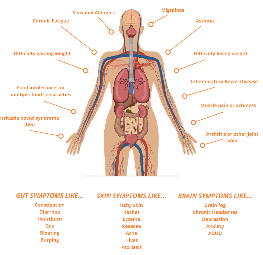the amazing process of digestion inside the human body Describe the process of digestion in human beings elegant the function of the digestive system in the human body, picture size 638x479 posted by admin at may 15, 2018.